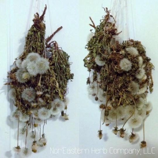Dandelion Drying.jpg