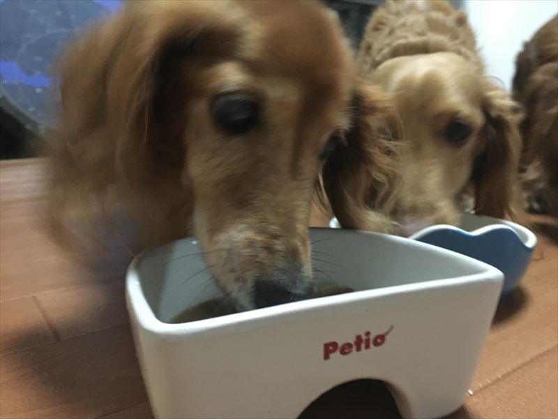 ペティオ (Petio) 犬用陶器食器 メモリ付ボーン Mのレビュー説明・良さ シニア犬・老犬が食べやすいオススメの食器! ペティオ (Petio) 犬用陶器食器
