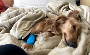 ガンと宣告された犬
