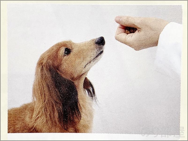 フードなどの好物を準備します。 犬の歯磨きのために 口(マズル)を触られることに慣らせましょう【必見】犬の歯磨きで歯周病や病気を防ぐオススメの方法。放置すると頬に穴が空きます。歯磨きを嫌がる犬には水やご飯に混ぜて予防を!
