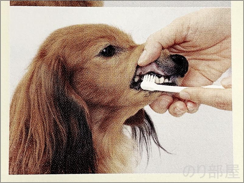 デンタルブラシへの抵抗がなくなったら 徐々に時間を延ばしブラシを動かして 歯みがきをします。 みがきやすい犬歯や切歯(前歯)から始め、 徐々に奥の方の歯までみがきましょう。 犬の歯磨きのためにデンタルブラシを使って歯みがきをしましょう。【必見】犬の歯磨きで歯周病や病気を防ぐオススメの方法。放置すると頬に穴が空きます。歯磨きを嫌がる犬には水やご飯に混ぜて予防を!