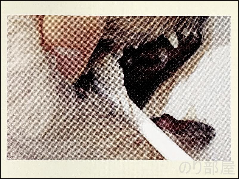 犬は長い時間口を開けさせられるのを嫌がるので、 1回につき1本を短時間で行い、 無理にみがかないようにしましょう。 犬の歯磨きのために口を少し開けさせて、歯の裏(内)側をみがきましょう 【必見】犬の歯磨きで歯周病や病気を防ぐオススメの方法。放置すると頬に穴が空きます。歯磨きを嫌がる犬には水やご飯に混ぜて予防を!