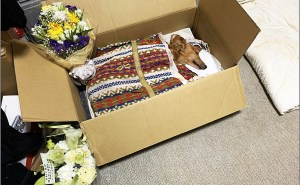 犬が亡くなったら犬を段ボール・棺に入れて火葬まで遺体を保管する。 犬・猫(ペット)の亡くなってから火葬まで自宅での遺体の管理方法&やること。死んだあとの対処方法・必要な物・気を付けることなど。【死後の処置】