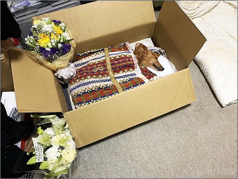 犬が亡くなったら犬を段ボール・棺に入れて火葬まで遺体を保管する。 犬・猫(ペット)の亡くなってから火葬まで自宅での遺体の管理方法&やること。死んだあとの対処方法・必要な物・気を付けるオススメのことなど。【死後の処置】