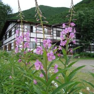 白い天然温泉の宿福島屋の外観