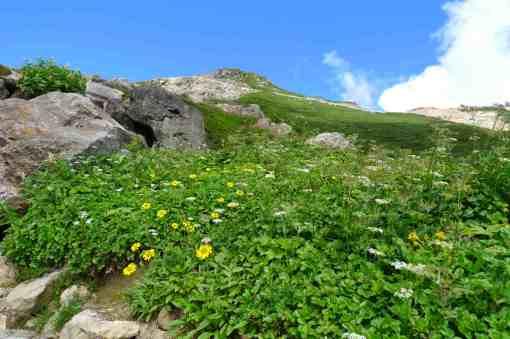 肩の小屋 登山道では高山植物も景色も楽しめる
