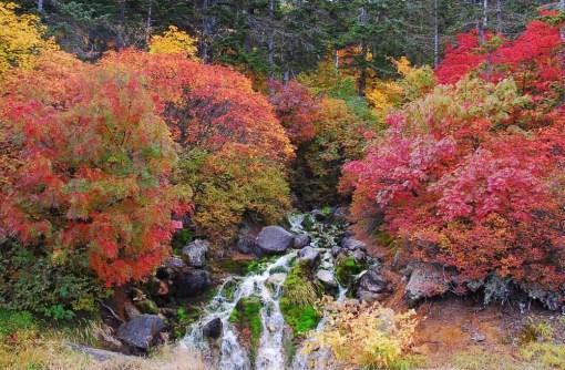 冷泉小屋前紅葉