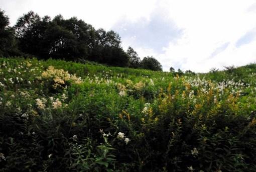 宝徳霊神下のお花畑