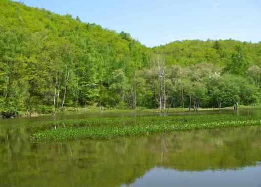 一の瀬 あざみ池の新緑