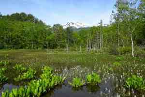 一の瀬園地のどじょう池と乗鞍岳