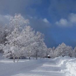 積雪の翌日