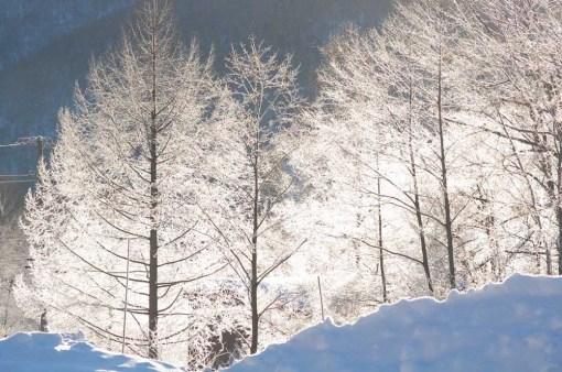 朝のスキー場