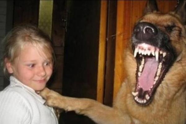 犬に笑われる