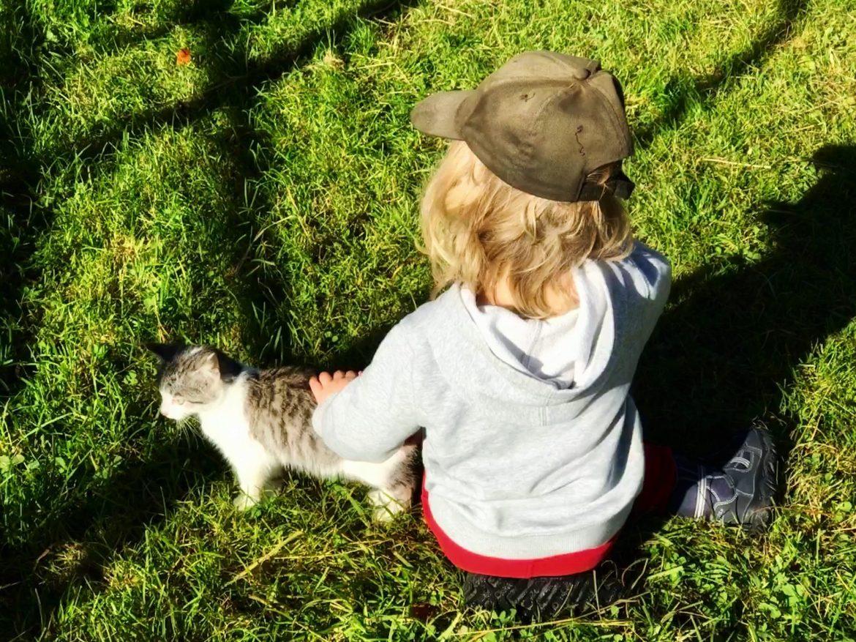 Kindermärchen inspiriert von einer Katze – nicht von den Gebrüder Grimm