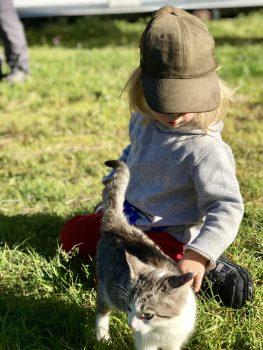 Im Kindermärchen kurz fassen ist eine Kunst – Merlin und eine kleine Katze