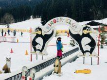 Merlin auf dem Förderband in der Skischule