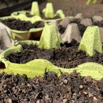 Gärtnern mit Kindern –Kostenlos & umweltfreundlich: Aussat in Eierpappen.
