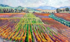Sonoma Fall Vineyard