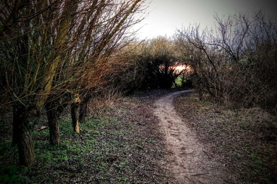 Somerset Levels (8)