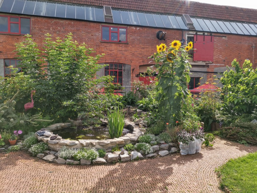 Pond and sunflowers in the Red Brick Community garden in Glastonbury