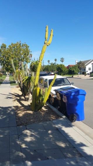 Desert Tree on Curb.