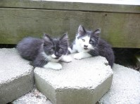 My neighbors' kittens visiting our garden.