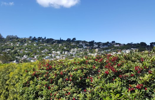 Sausalito, CA homes on a hill