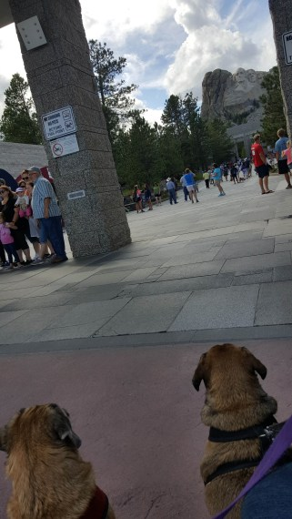Dogs getting a peek at Mount Rushmore