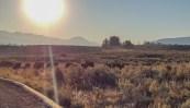 Sunrise Bison