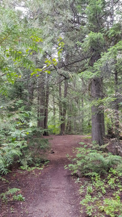 Old growth forest flanks the path at Trail of the Cedars