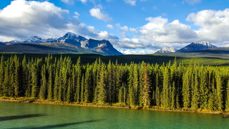 Puffy clouds dot the blue sky over towering mountains and a thick conifer forest along the Bow River in Banff National Park, Canada