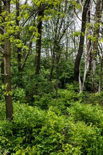 Beautiful green woods