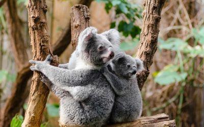 Crédit d'impôt : avez-vous pensé à parrainer un animal dans un zoo ?