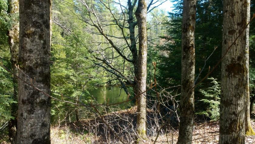 Norma Walton walk in the woods