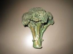 15. broccoli 5.25 in