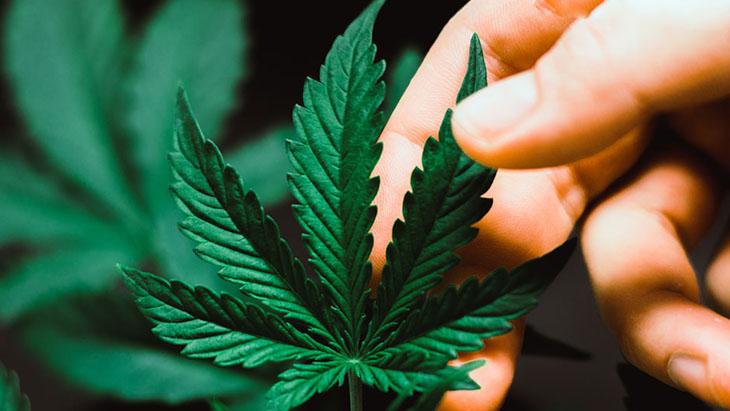 Marijuana leaf and Hand