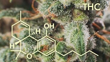 Marijuana THC