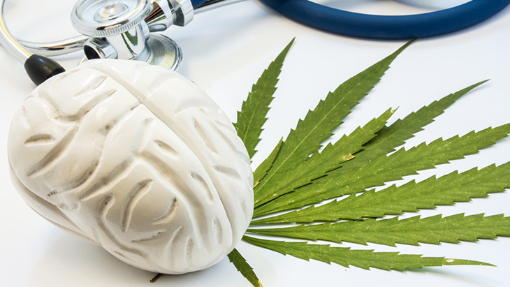 Marijuana Brain