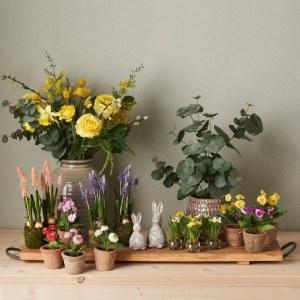 Plantor & Blommor