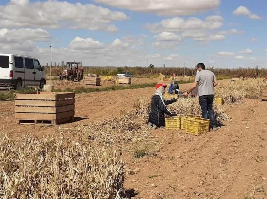 La Seguridad Social gana en Extremadura 764 afiliados extranjeros en junio