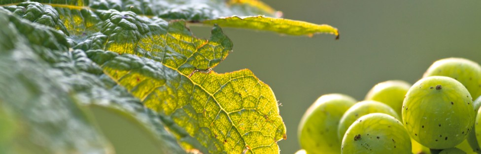Why Grapes, Hops, and Plates?