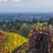 White Rose Winery landscape