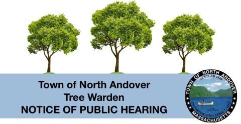 tree hearing.jpg