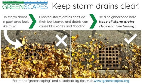 Greenscapes-Keep-Drains-Clear.jpg