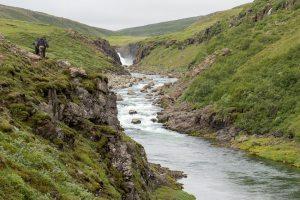 North Atlantic Salmon in Icelandic Rivers