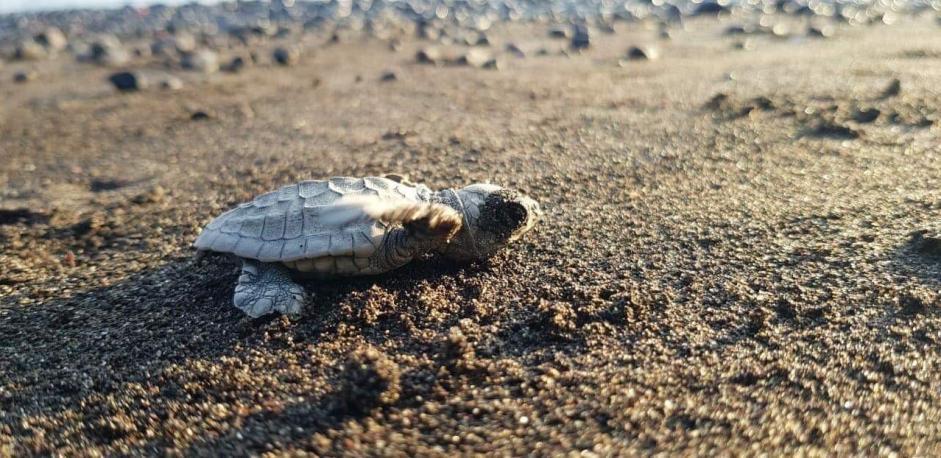 turtle conservation program bali