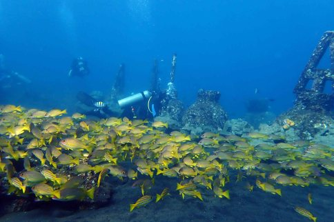 building artificial reef structures