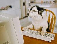 typing dog