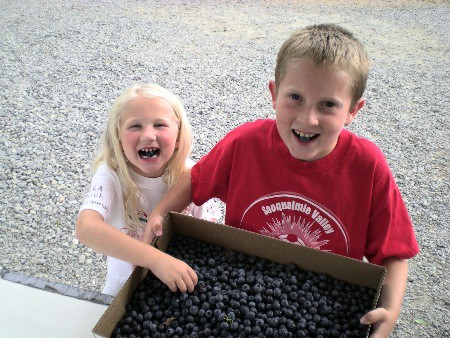 Blueberries at Bybee Farms