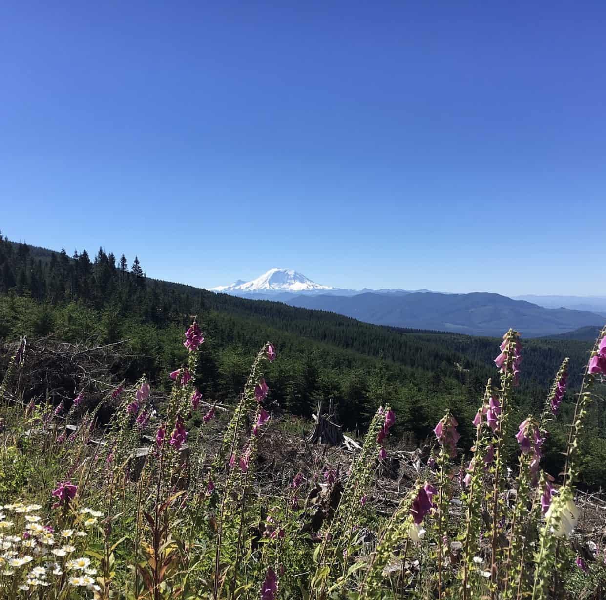 Mt Rainier view running across Rattlesnake Mountain